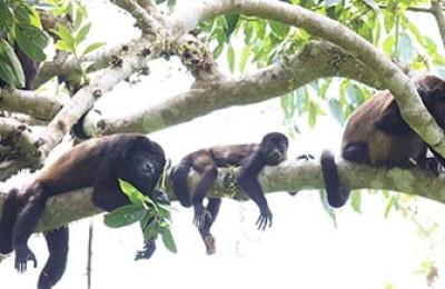 Land tour in Placencia Belize
