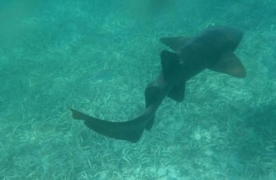 Snorkeling Bugle Caye Placencia Adventures