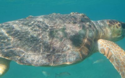 Snorkeling at Ranguana Caye with Placencia Adventures