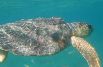 Thumbnail snorkeling at ranguana