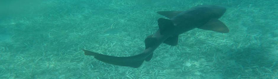 Snorkeling in Placencia Belize