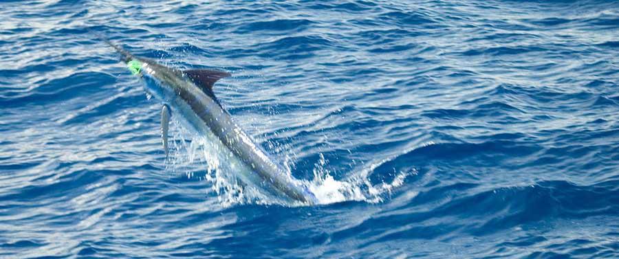 Placencia adventures deep sea fishing charter for Deep sea fishing belize