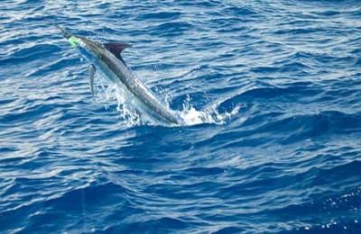 Deep Sea Fishing in Belize