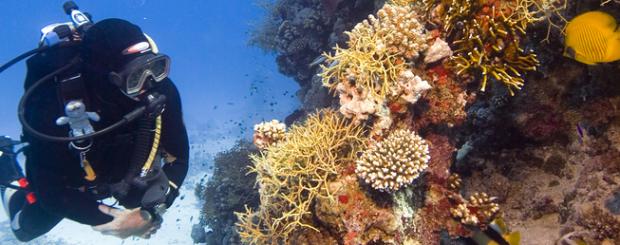 Belize Scuba Diving Main