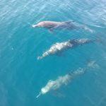 swim,belize,Dolphins,snorkel.
